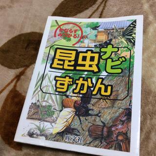 オウブンシャ(旺文社)の昆虫ナビずかん かならずみつかる!(絵本/児童書)