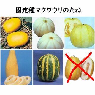マクワウリ種●奈良一号まくわ 菊メロン バナナまくわ タイガーメロン 銀泉ほか(野菜)