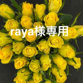 バラ(切り花 ・生花)ゴールドラッシュ 40㎝SM混合サイズ 50本 産地直送!(その他)
