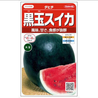 超人気 黒皮大玉スイカの種 野菜種 4粒(野菜)