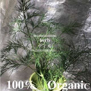 食用 ディル 生葉 カット茎 自然農法 完全無農薬無化学肥料有機栽培(野菜)