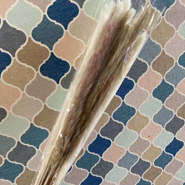 パンパスグラス ドライフラワー テールリード 白10本 茶色5本 セット ハンドメイドのフラワー/ガーデン(ドライフラワー)の商品写真