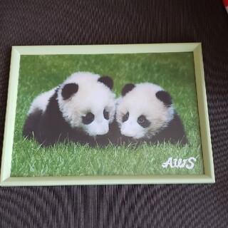 双子パンダの写真(写真)