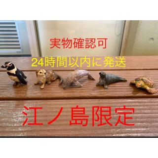 はしもとみおの彫刻 新江ノ島水族館限定ガチャ コンプリート 情熱大陸(彫刻/オブジェ)