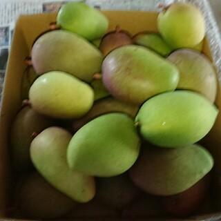 摘果 マンゴー 6kg 3. グリーン マンゴー(フルーツ)