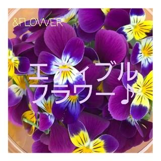 食べられるお花♪エディブル フラワー ビオラの種(その他)