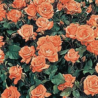 エンフォルド(ENFOLD)の美品 maison de beige  赤ワンピース(ロングワンピース/マキシワンピース)