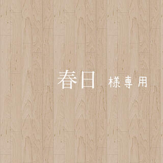 多肉植物 エケベリア 実生 ケーレス 種子(その他)