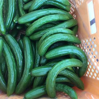 きゅうり 曲がり 9kg (野菜)