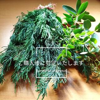❤︎︎コニファー&ユーカリ❤︎︎ フレッシュ 小枝セット 無農薬(その他)
