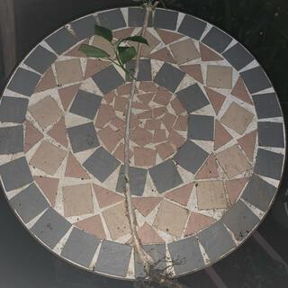 アナベルの苗 アナベル 紫陽花(プランター)