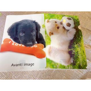 クリアファイル 犬 カラー(クリアファイル)