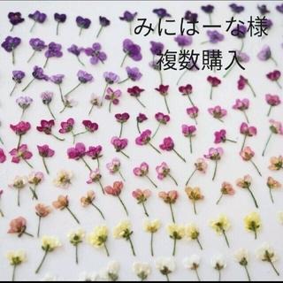 200輪+α 大量1輪バラタイプ【No.1増量】 アリッサム 素材 花材 押し花(ドライフラワー)