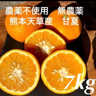 農薬不使用 無農薬 甘夏 7kg 熊本天草産(フルーツ)