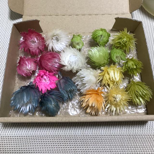 花材  シルバーデイジー  20輪 ハンドメイドのフラワー/ガーデン(ドライフラワー)の商品写真