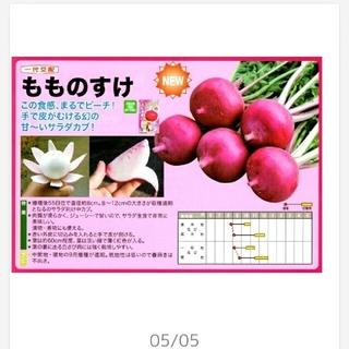 サラダかぶ ★もものすけ★ 50粒 ★ピンクで可愛い(その他)