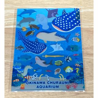 美ら海水族館 クリアファイル(クリアファイル)