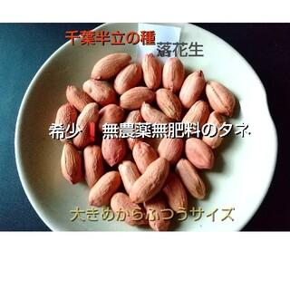 希少❗️落花生 千葉半立の種18粒  無農薬無肥料 自然農(野菜)