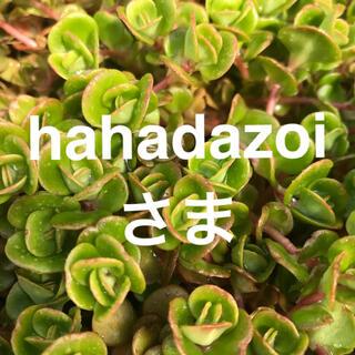 hahadazoi様専用セダム2種多肉植物(その他)