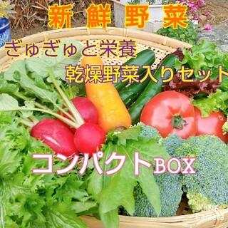 新鮮野菜【コンパクト野菜セット&ギュギュッと乾燥野菜♪】農薬不使用(野菜)