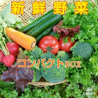 新鮮野菜【畑〜直送便♪コンパクトBOX】農薬不使用(野菜)