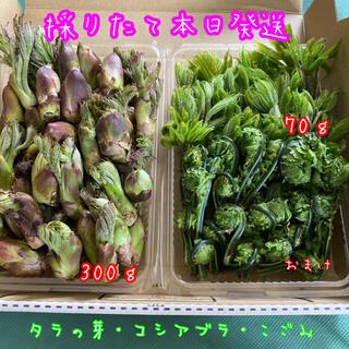 山菜セット♪  タラの芽・コシアブラ・こごみ(野菜)