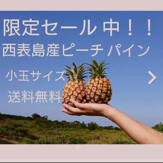 10%オフセール中!西表島産ピーチパイン 小玉サイズ約5㎏(10~13玉)(フルーツ)