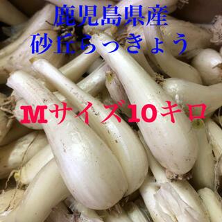 鹿児島県産砂丘らっきょうMサイズ10キロ(野菜)