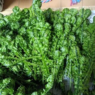 山菜 こごみ 朝採れ 250g (野菜)