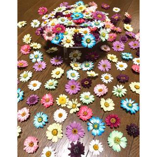 銀の紫陽花が作った可愛いマーガレットのドライフラワー山盛り50冠!