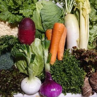むの野菜セット10品80サイズ満杯(野菜)