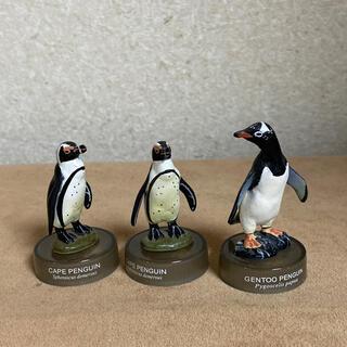 カイヨウドウ(海洋堂)の海洋堂 ペンギンズランチ 3個セット(その他)