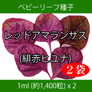 ベビーリーフ種子 B-38 レッドアマランサス(緋赤ヒユナ) 1ml x 2袋(野菜)