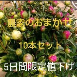 【芍薬】しゃくやく 農家のおまかせ10本セット(その他)