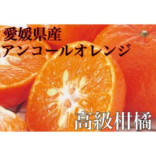 目立つ甘さとコク!!ハウス栽培高級柑橘【アンコールオレンジ】青秀品 L 2kg(フルーツ)