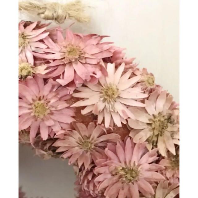 フラワーリース♡チーゼルフラワー♡ギフト ハンドメイドのフラワー/ガーデン(ドライフラワー)の商品写真