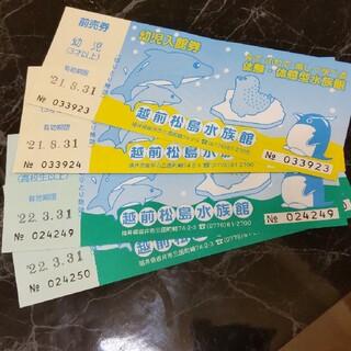 家族で越前松島水族館(水族館)