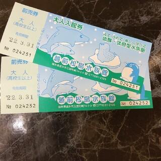 越前松島水族館(水族館)