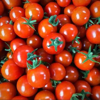 【コトハル様専用】採れたて!ミニトマト1キロ(野菜)