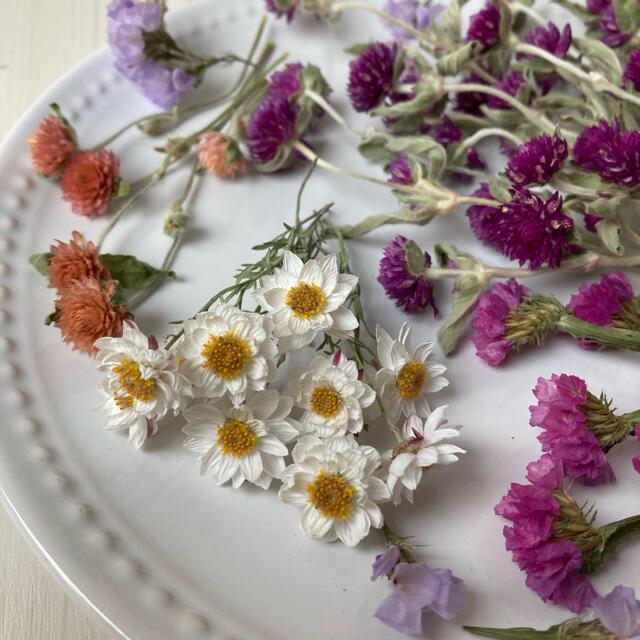 No.193  花材セット ドライフラワー 千日紅 花かんざし 他 ハンドメイドのフラワー/ガーデン(ドライフラワー)の商品写真
