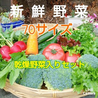 新鮮朝採り【畑〜新鮮な野菜と★乾燥野菜の直送便♪70サイズ】農薬不使用