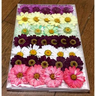 m⑤  銀の紫陽花が作った春色マーガレットのドライフラワー(ドライフラワー)