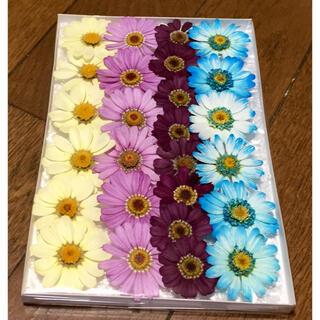 m⑥ 銀の紫陽花が作った春色マーガレットのドライフラワー(ドライフラワー)