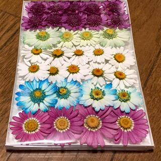 m⑨ 銀の紫陽花が作った春色マーガレットのドライフラワー(ドライフラワー)
