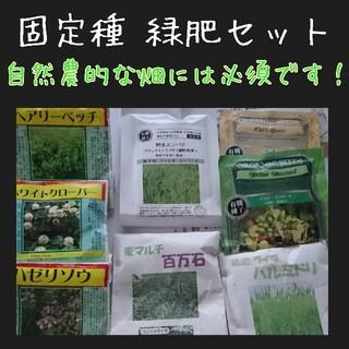 緑肥 固定種 野菜の種 ハーブの種 家庭菜園 有機種子 自然農 草マルチ 種子(野菜)