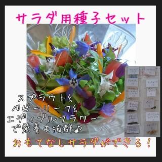 サラダ用種子セット 野菜の種 種子 種 家庭菜園 水耕栽培 エディブルフラワー(野菜)