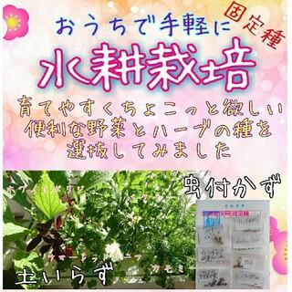 Mee様専用(野菜)