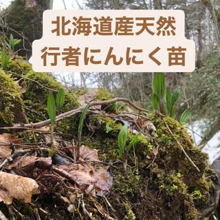 北海道産天然行者にんにく【苗】10本(野菜)