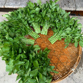 天然クレソン 250グラム(野菜)