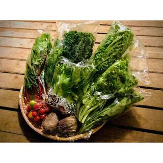 ご夫婦二人で食べきり量のサラダボウルが作れる詰め合わせセット【少量パック8品目】(野菜)